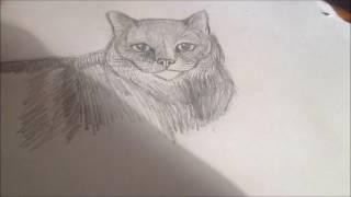 Кошка с натуры.(Графика, карандаш, формат А4)