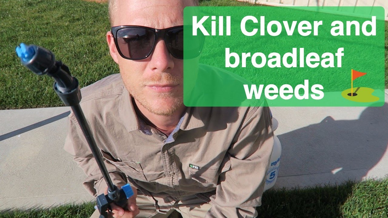 how to stop clover in lawn