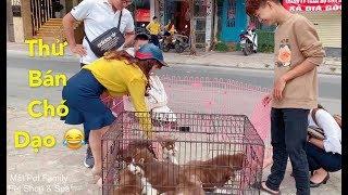 Thánh Cò bán chó dạo mới xuất hiện - cười náo loạn cả khu phố vì quá duyên - Mật Pet Family