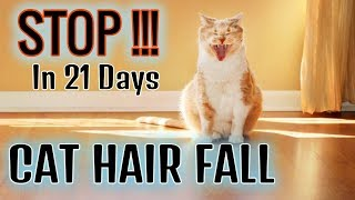 How To Stop Cats Hair Fall Problem Hindiurdu 2019