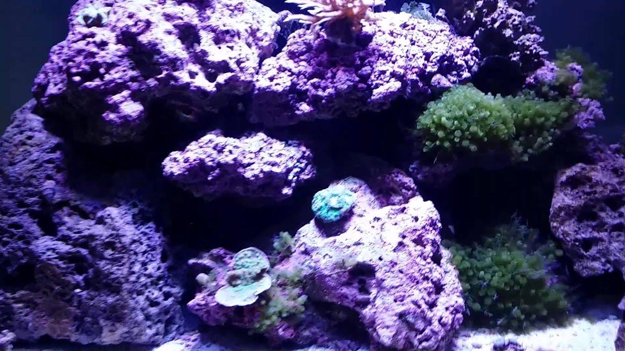 65 gallon rimless reef tank youtube