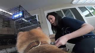 Doggy mount GoPro Hero 7 Black