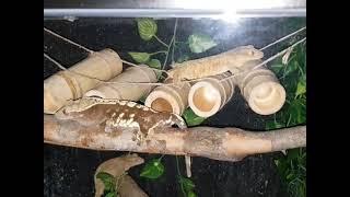 파충류 행동풍부화 크레스티드게코 감각풍부화 (Repti…