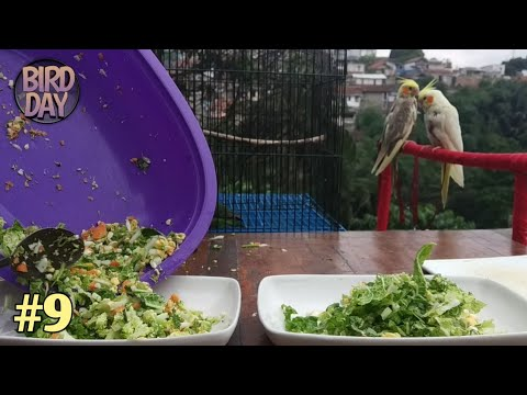 Extra Fooding For Cockatiel And Lovebird❗ | Part 9 | #DailyVlog