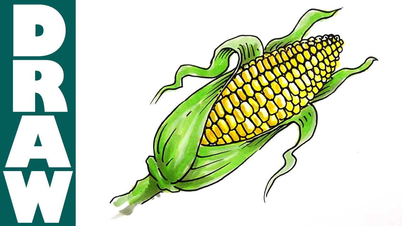 How to draw a Corn Cob - YouTube