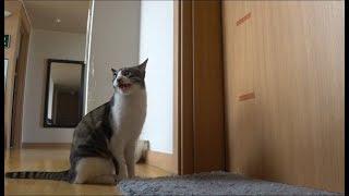 """집사가 화장실만 들어가면 """"나왕~"""" 하는 고양이"""