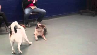 Josie & Roxy Play At The Austin Humane Society