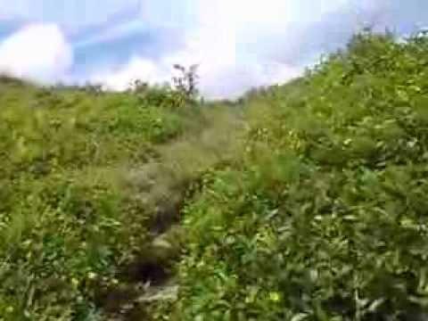 mantalungon DALAGUETE CEBU (the little Baguio)