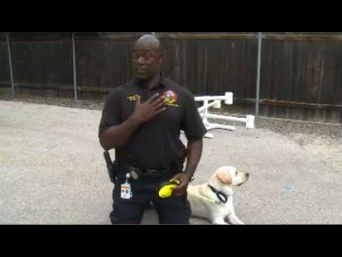 Austin fire lieutenant facing criminal investigation