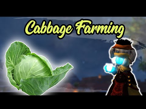 Guild Wars 2 - Cabbage Farming Guide with ASMR eating intro | April' Fools 2019 thumbnail