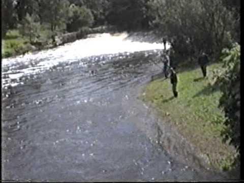 Mulcair Large Salmon Run 1990