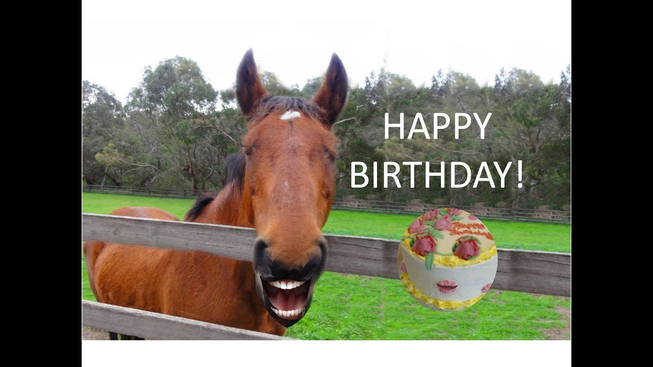 FUNNY HORSE Singing Happy Birthday