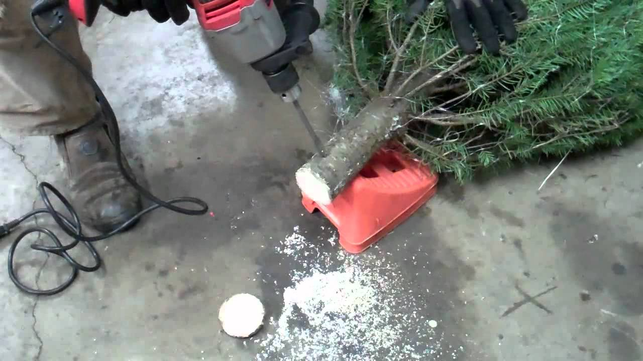 how to keep a christmas tree alive forever well at least until the holidays are over youtube - What Do You Put In Christmas Tree Water