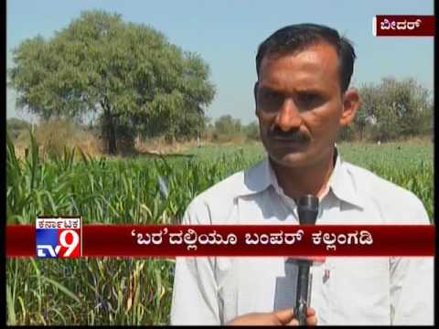Drought Hit Farmer Finds Success in Watermelon Cultivation in Bidar, Karnataka