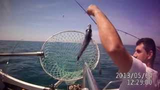 Video Pesca de sargos na Póvoa de Varzim download MP3, 3GP, MP4, WEBM, AVI, FLV Desember 2017
