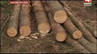 На Могилевщине сосновые леса поражает жук-короед