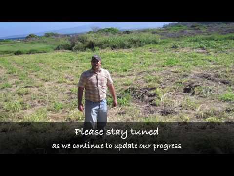 Wet Blade® Management of Guinea Grass