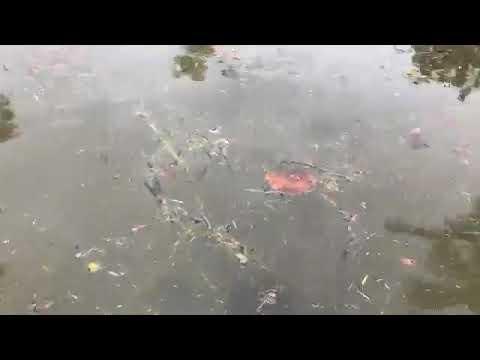VIDEO: Flooded streets on Longboat Key