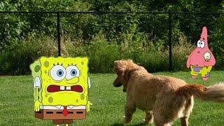 spongebob in real life episode 3 jchasefilms