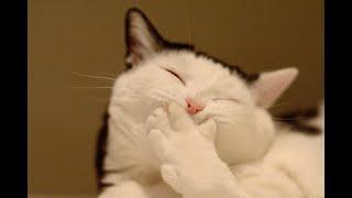 Смешные коты Подборка за неделю 12