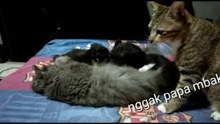 Funny momen my cats!😂😂