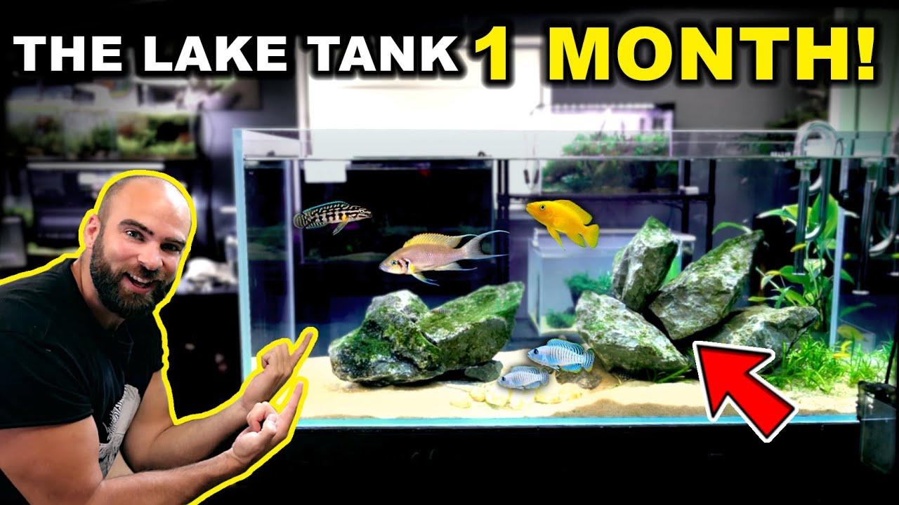 THE LAKE TANK AFTER 1 MONTH!! (KRIB BABIES)