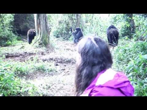 Kimberly's Travel Adventures - Rwanda Gorillas