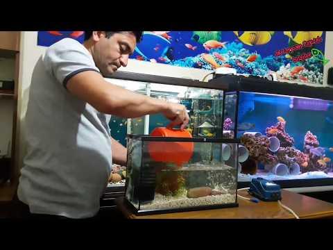 YAVRU BALIKLARA ÖZEL, Akvaryum Balıkları, Aquarium Setup