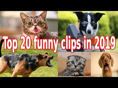 Try Not To Laugh & Challenge  Funny Cat & Dog Vines compilation 2019