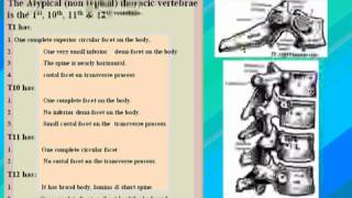 5 Thorax د  أحمد كمال   The Atypical Thoracic Vertebrae data 2