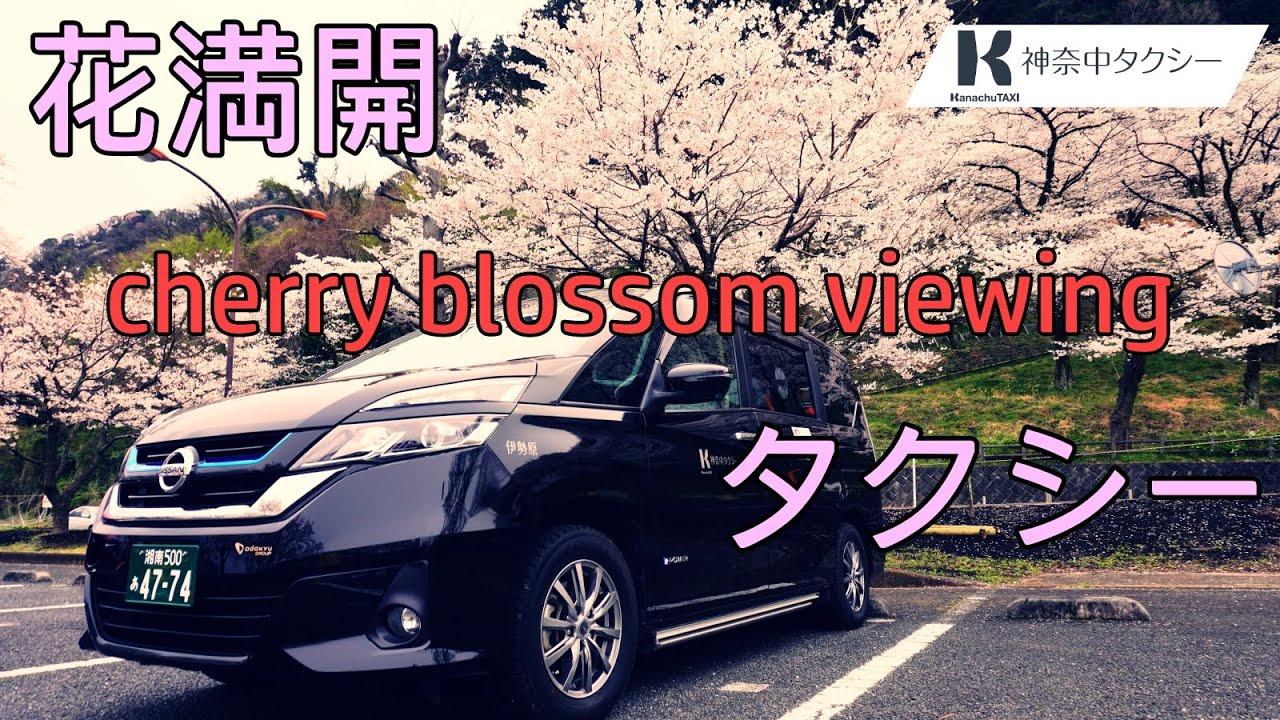 お花見観光タクシーイメージ動画公開について