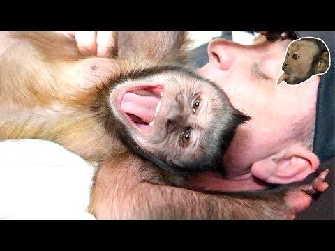Capuchin Monkey LOVES His Human!