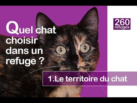 Quel Chat Adopter Dans Un Refuge ? (1.le Territoire Du Chat)