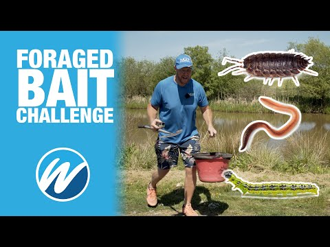 Foraged Bait Challenge | Andy May Vs Jamie Hughes | Fish With What You Find!