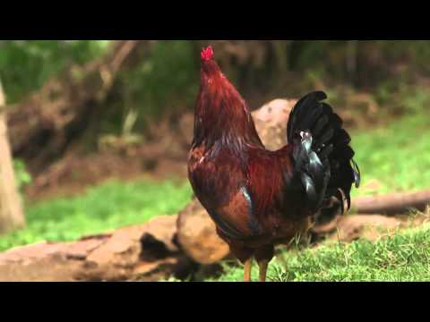 Shamba Shape Up Sn 05 - Ep 20 Chicken, Maize, Post Harvest Losses (English)