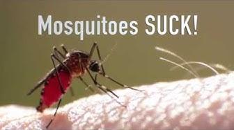 Charlotte Mosquito Exterminator
