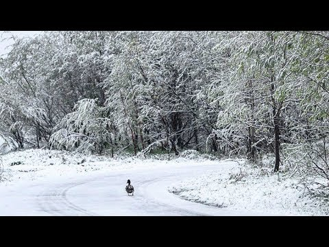 Summer Snow in Russia in Two Regions | Mini Ice Age 2015-2035 (399)
