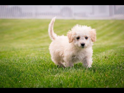 Funny Dog Puppy Videos, Dog Puppy Sound
