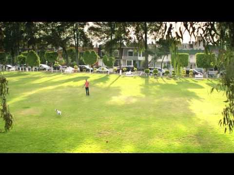 Dog Film A14 Travel,Transport,Tourism
