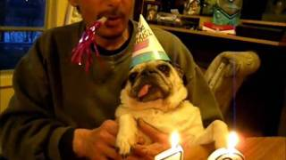 Pug 12th Birthday Party (sweetie Pie) Adorable!