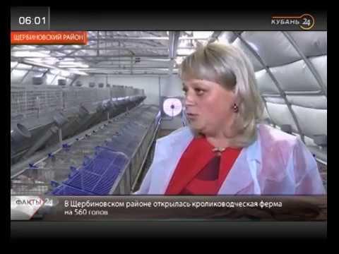Krasnodar- yeni dovşan fermasının açılışı