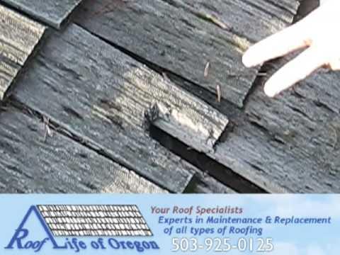 squirrel damage to a cedar roof in portland oregon roof life of oregon - Roof Life Of Oregon