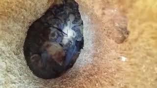 В Павлограде коммунальщики наткнулись на гнездо летучих мышей