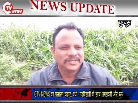 CTV News 26 JAN बेमौसम बारिश ने किसानो कि फसलो को किया बरबाद
