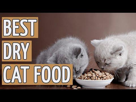 ⭐️ Best Dry Cat Food: TOP 9 Dry Cat Foods Of 2018 ⭐️