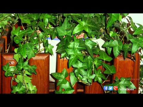Indoor Plants For Air Purification