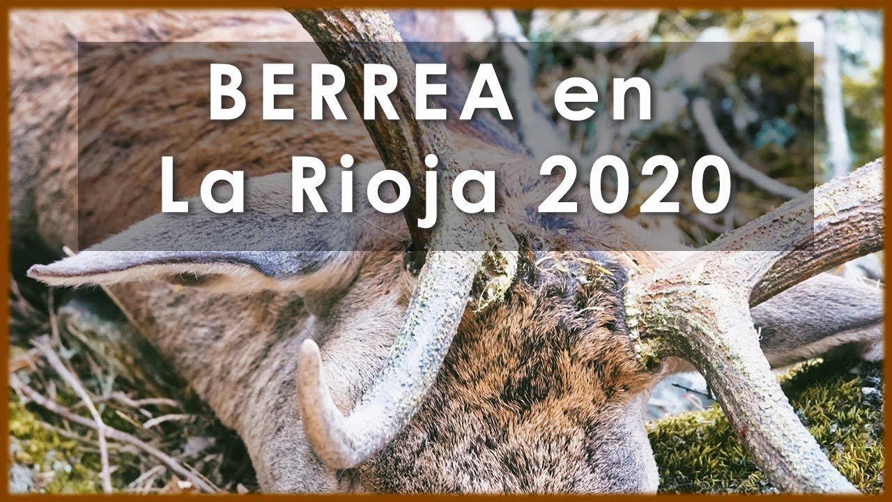 Berrea del CIERVO en La Rioja Septiembre【 2020 】Videos de Caza 🦌💥