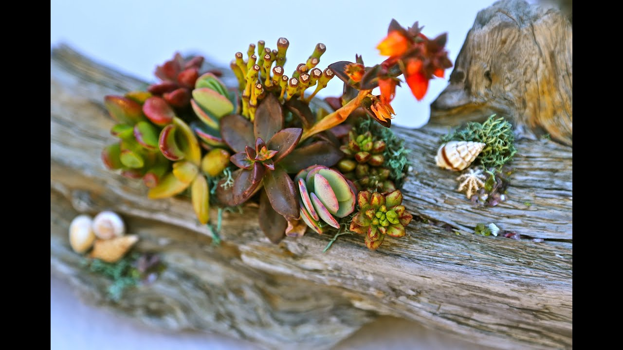 How To Make Beautiful Succulent Driftwood Designs Youtube