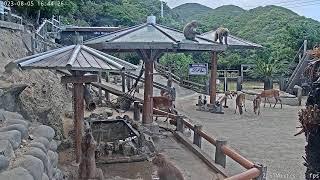 Preview of stream Awaji Island Monkey Center