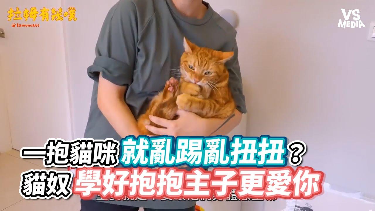 一抱貓咪就亂踢亂扭扭?貓奴學好抱抱主子更愛你《VS MEDIA x 拉姆有幾噗》